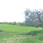 Truffa all'Unione Europea: denunciati 12 agricoltori casertani